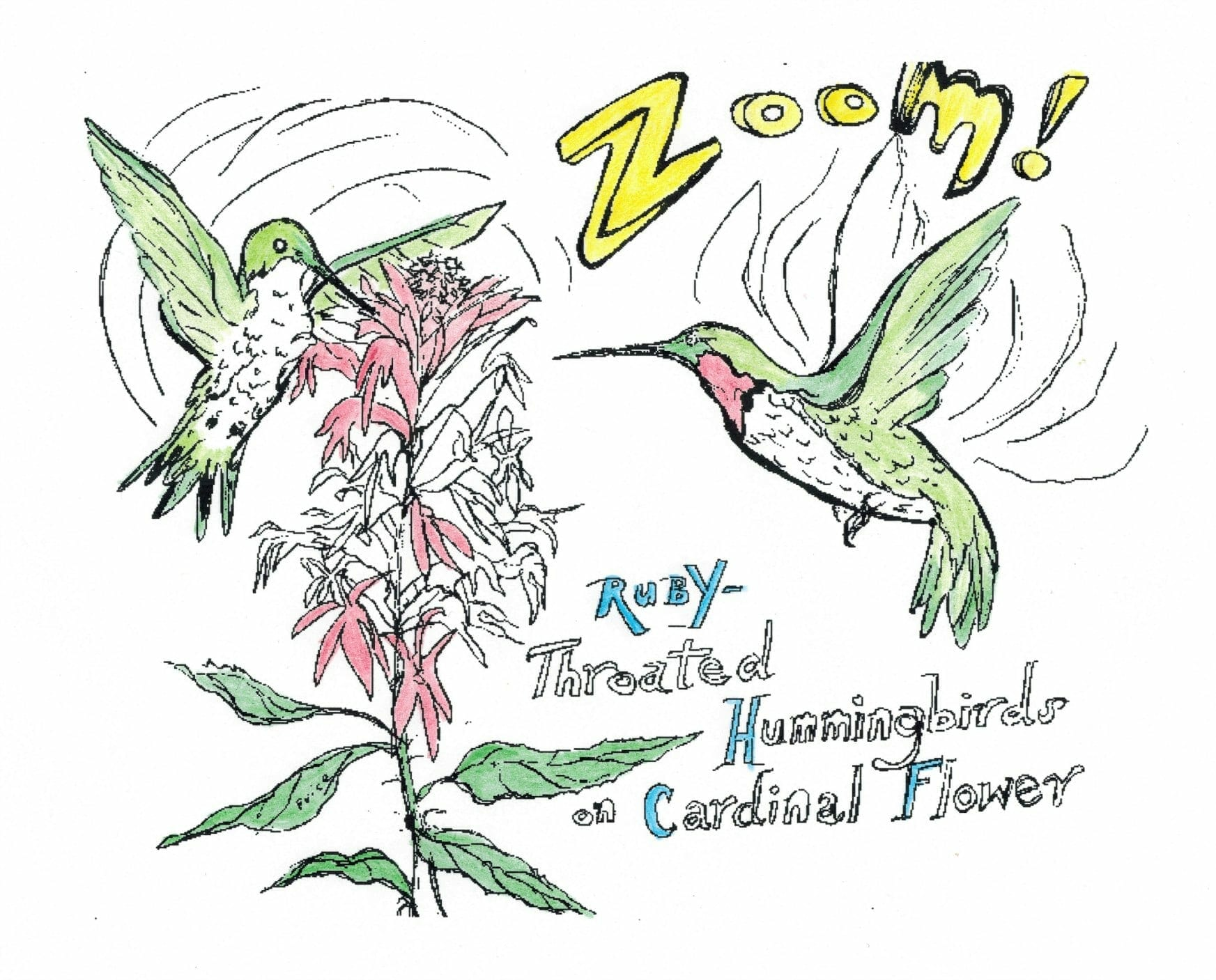 coloring pages gnps coloring pages gnps ruby throated hummingbird coloring pages