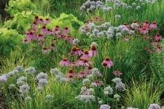 claudiawest-gardenimage-237x157