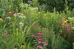 Complex plant communities only persist if designers and land managers collaborate.