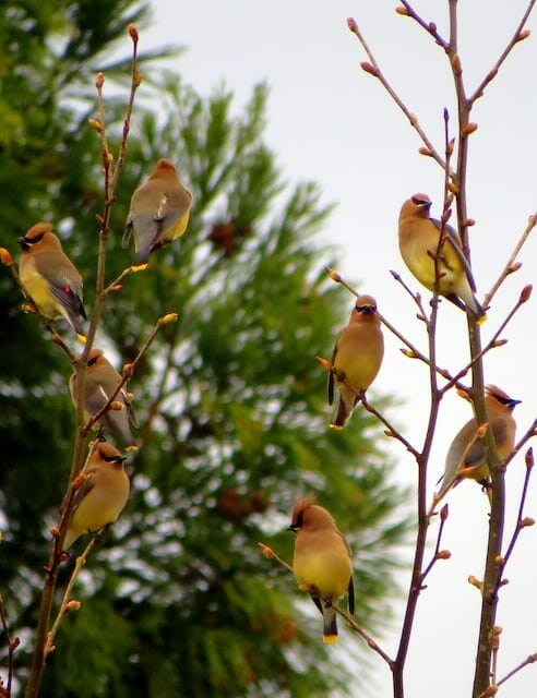 Native Plants and Birds at Kennesaw Mountain