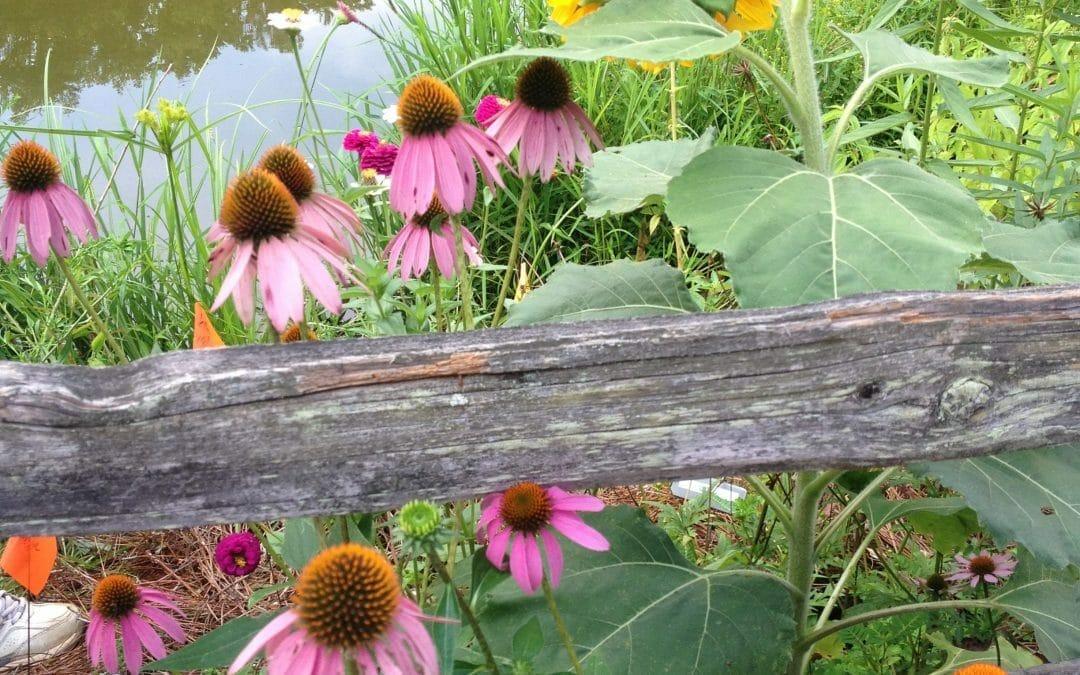 New Pollinator Garden Attracting Everyone